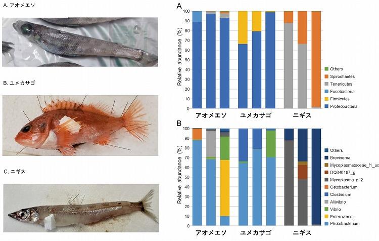 【プレスリリース】沼津東高校とグリーン科学技術研究所の道羅英夫准教授らが、駿河湾から採集された深海魚3種の腸内細菌叢を解析し、国際学術誌に発表しました。